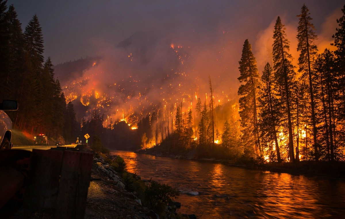 What Should You Do to Survive a Forest Fire? How to Survive in Your Home, Your Car, or On Foot