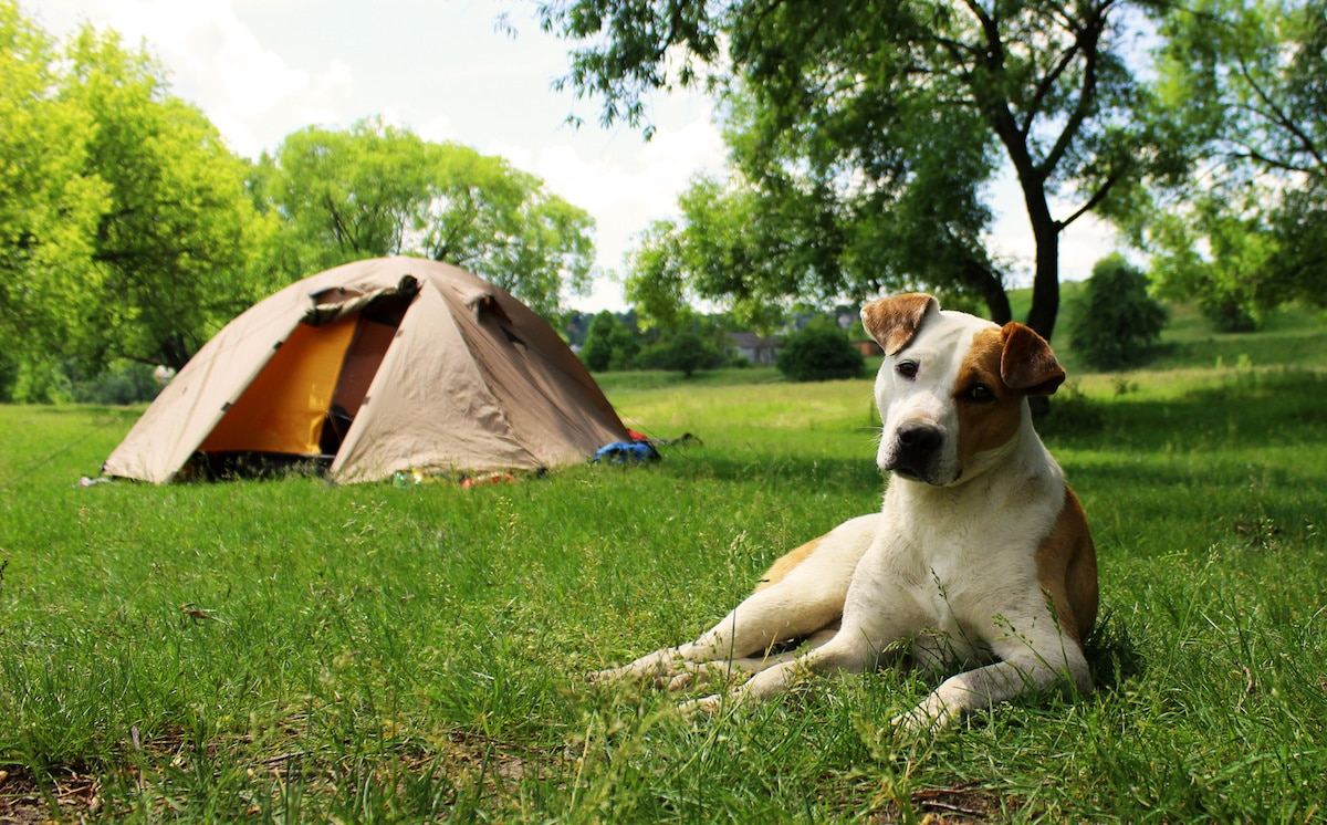 How to Camp Safely With Your Dog
