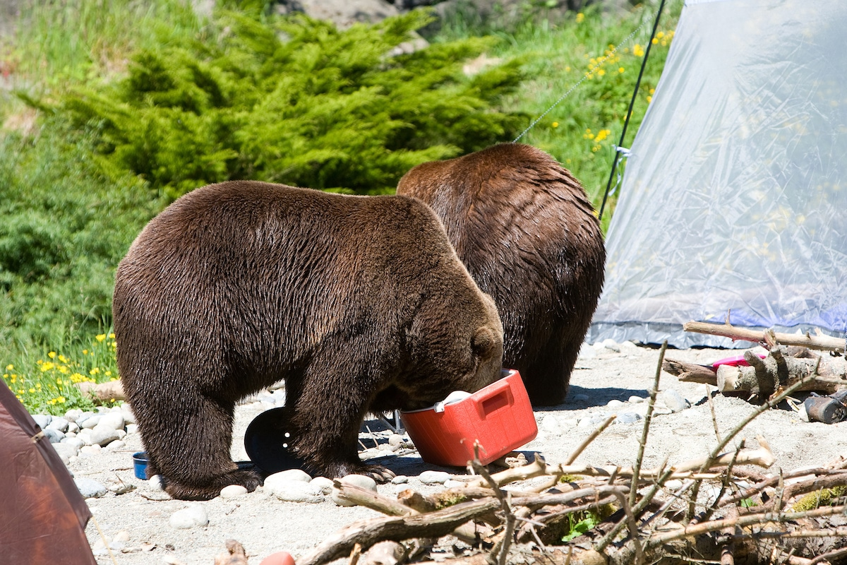 Top 5 Best Bear Proof Coolers